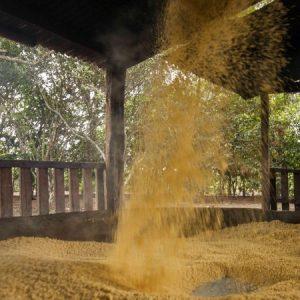 Também é comum o movimento de jogar a farinha para cima que ajuda a secar mais a massa.  (Foto: Mayra Galha)