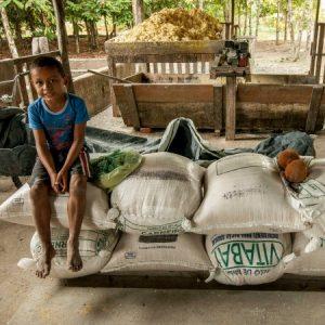 Taí a produção do Seo Brejera: 1.400 kg de mandioca rende 400 kg de farinha d' água. (Foto: Mayra Galha)