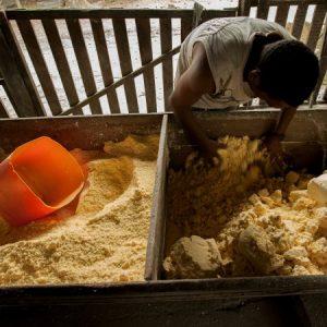 Os blocos de massa seca são então desfeitos e peneirados. (Foto: Mayra Galha)
