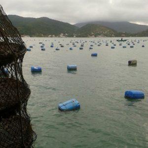 Já na balsa, ao lado das boias com lanternas de ostras e linhas de mariscos; as das vieiras ficam fora da baía.