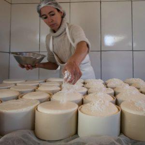 Por fim, coloca-se sal no topo do queijo, que depois vai para as prateleiras de maturação. (Foto: Mayra Galha)