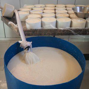 Leite ordenhado na hora é conduzido por canos até a queijaria. (Foto: Mayra Galha)