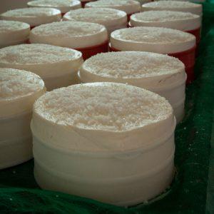 Queijo ainda bem fresco sendo salgado na queijaria da Luzia e do Nereu. (Foto: Mayra Galha)