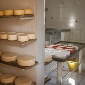 Destaque para duas partes da queijaria da Valdete e do Zé Mário. (Foto: Mayra Galha)