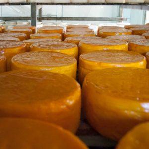 Resina amarela é uma das aplicadas pelo produtor no queijo... (Foto: Mayra Galha)