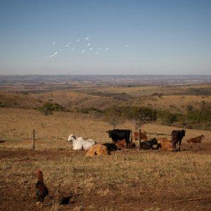 Vista da propriedade de Vanderlino e Dina, na Serra do Salitre. (Foto: Mayra Galha)