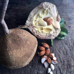Ouriço/cumbuca da castanha de sapucaia, Crédito: Casa Ataré Lab